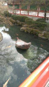 ③手水舎先の太鼓橋。鯉がたくさん。