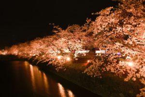 松本城夜桜2